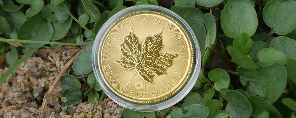 1oz Gold Maple Coin