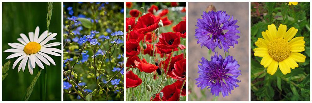 Bleyer's-Blooming-Flowers